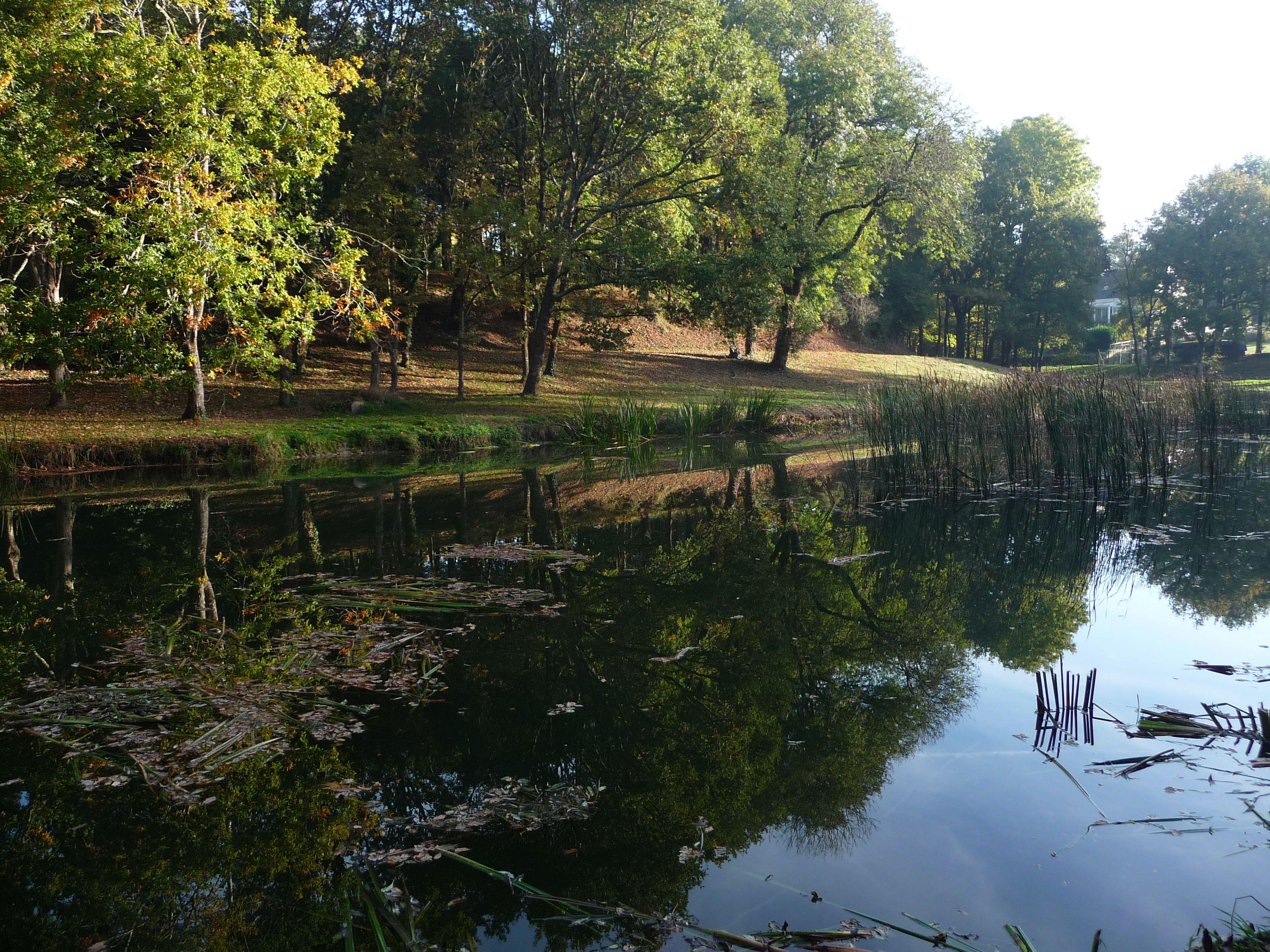 étang de la Michochêne