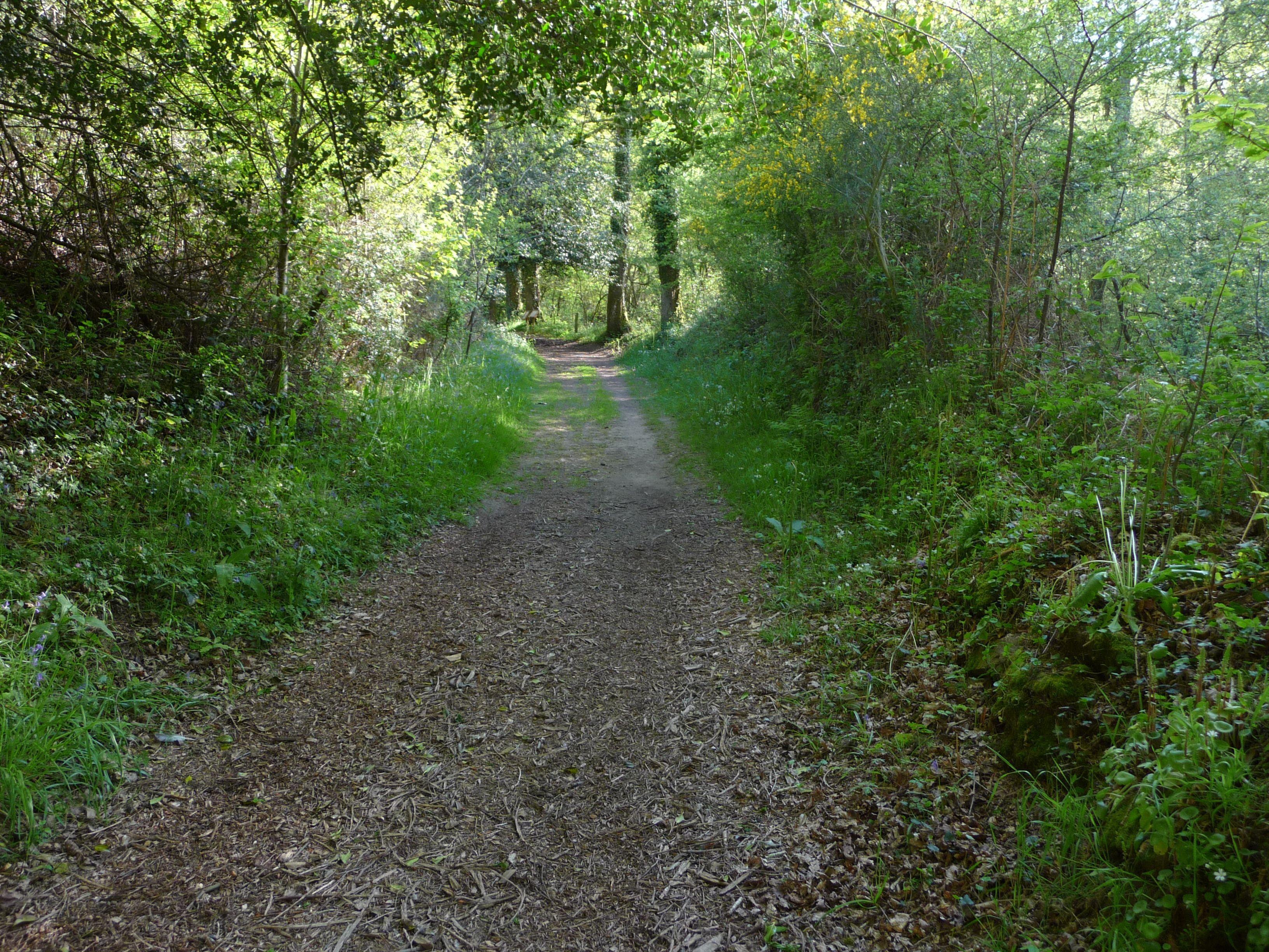 chemin Michochêne