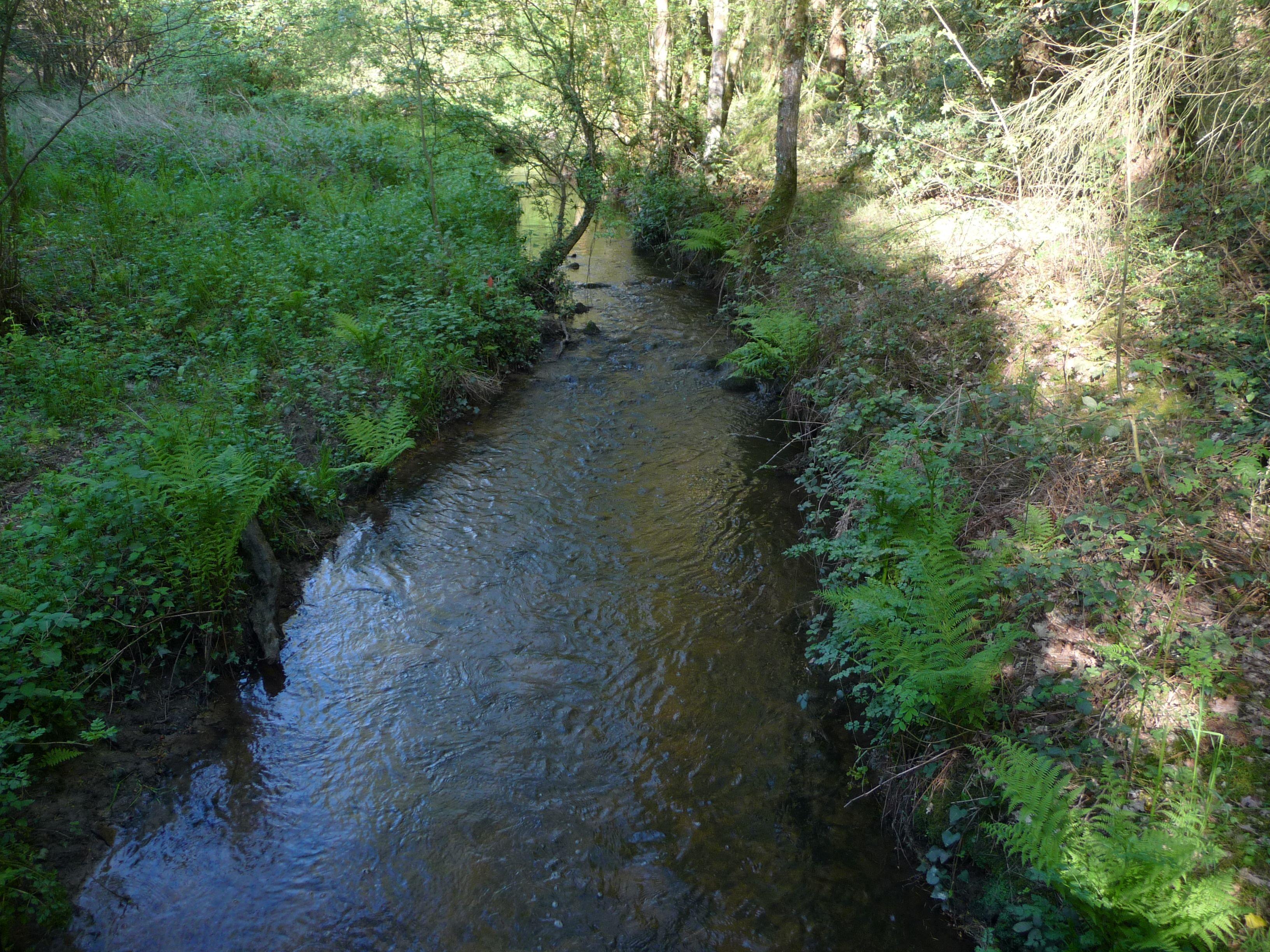 Petite rivière Michochêne